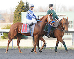 March 21, 2015: Metaboss and jockey Alex Solis before the Horseshoe Casino Spiral Stakes at Turfway Park.