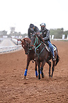 RIYADH, SA February 19 2021: CHARLATAN (USA) Track work from King Abddulaziz Racetrack, Riyadh, Saudi Arabia. Shamela Hanley/Eclipse Sportswire/CSM