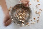 Sorting of Jewelmer pearls in Manila