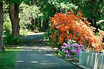 Lane with orange flowering shrub