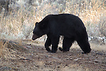 Yellowstone Wildlife Photos