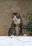 Tel Aviv cats