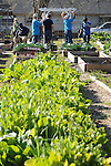 Volunteers from Slalom Consulting work at the Kashmere Community Garden on Cavalcade Saturday Feb. 27,2016.(Dave Rossman Photo)