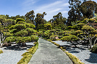 Beautifully coiffed trees adorn the path at the Japanese Garden in Hayward, California.