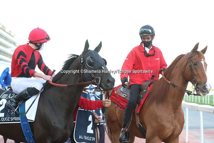 March 27, 2021: EXTRAVAGANT KID #2 in the post parade for the Al Quoz sprint on Dubai World Cup Day, Meydan Racecourse, Dubai, UAE. Shamela Hanley/Eclipse Sportswire/CSM
