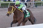 Wildcat Red and jockey Javier Castellano cruise to victory in the Hutcheson Stakes(G3) for 3 year olds. Gulfstream Park, Hallandale Beach Florida. 02-01-2014