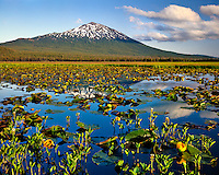 Indian pond lilies in Sparks Lake and Mt Bachelor in Deschutes National Forest Oregon