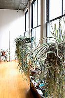 plants next to the window