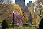 Spring color in the Boston Public Garden, Back Bay, Boston, MA, USA