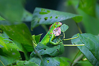 Costa Rica's beautiful nature and wildlife, in Central America.