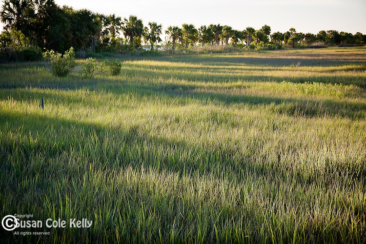 Beautiful marshland on Lazaretto Creek, Tybee Island National Wildlife Refuge, SC