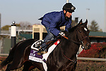 Court Vision, trained by Dale Romans and to be ridden by Robby Albarado , exercises in preparation for the 2011 Breeders' Cup at Churchill Downs on  October 31, 2011.
