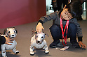Launch ceremony for Sony's robot dog Aibo ERS-1000