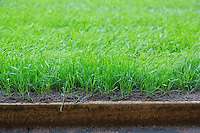 Hybrid grass at the Millennium Stadium, Cardiff, United Kingdom. 7th October 2014