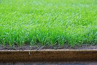 Hybrid grass at the Millennium Stadium, Cardiff, United Kingdom. 7th October 2014