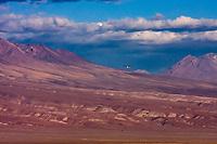 South America, Chile, Salar de Atacama laguna Chaxa, flying flamingo