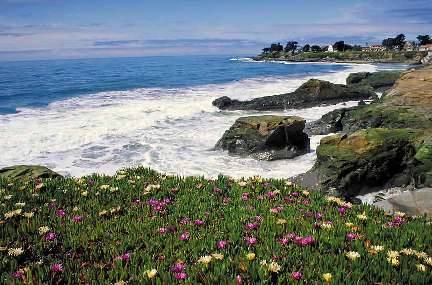 coastal homes and flowering ice plant with ocean background along California Coast Highway 101. Santa Cruz California, Pacific coast.