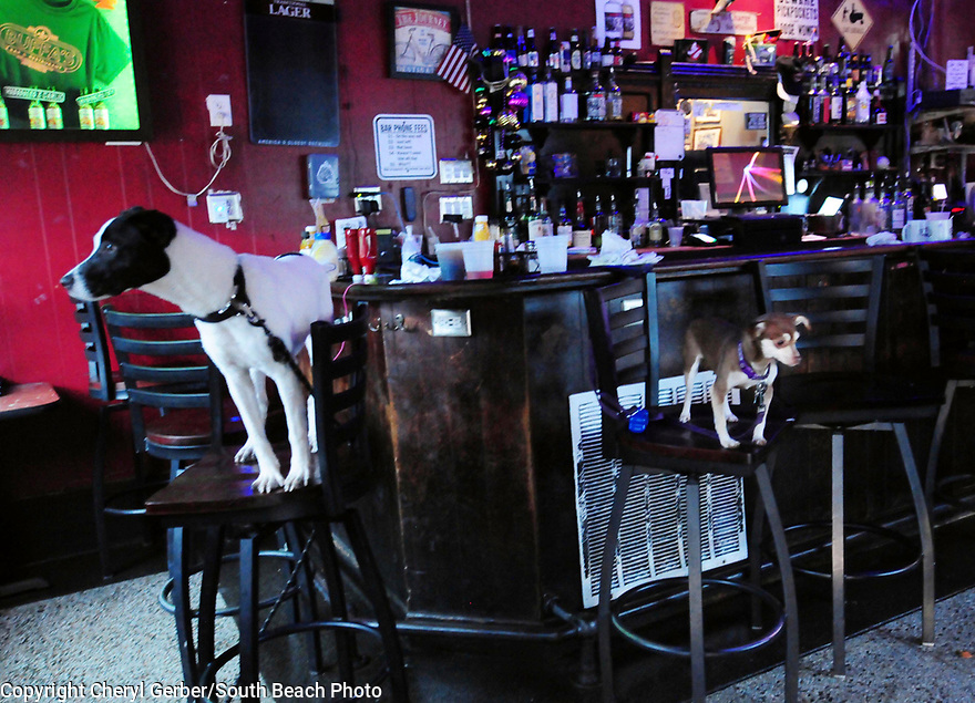 Two dogs at Buffa's Bar near the French Quarter sit on stolls as water enters the business. Heavy rains flooded streets and businesses ahead of Tropical Depression Barry, which is expected to make landfall as a Category 1 hurricane on Sat., in New Orleans, Wed., July, 10, 2019.
