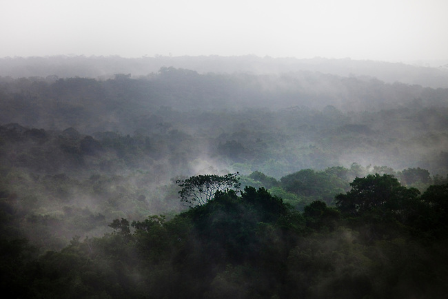 Deep inside the Mayan Biosphere fog risese above the forest canopy.