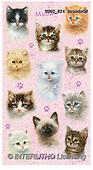 GIORDANO, CUTE ANIMALS, LUSTIGE TIERE, ANIMALITOS DIVERTIDOS, paintings+++++,USGIKITBREEDSCN,#ac#, EVERYDAY,cats