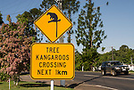 Lumholtz's Tree-kangaroo road sign