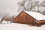 Weathered wooden barn covered with snow, Shenandoah Valley, Calif.