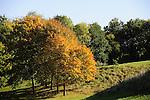 Birchwood Forest Park - Autumn