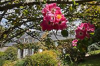 Europe/France/Normandie/Basse-Normandie/50/Manche/Presqu'île de la Hague/Omonville-la-Petite: Maison de Jacques Prévert - le jardin<br />  [Non destiné à un usage publicitaire - Not intended for an advertising use]