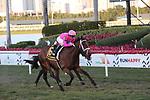 February 29, 2020: #6 Zulu Alpha with jockey Tyler Gaffalione on board, wins the Mac Diamida Stakes  G2 on February 29th, 2020 at Gulfstream Park in Hallandale Beach, Florida. LizLamont/Eclipse Sportswire/CSM