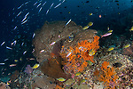 Colorful reef with myriads of fish, gorgonians and other soft corals