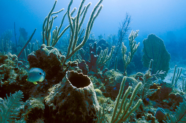 Sponges, seafans and fish