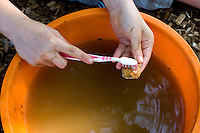 Washing the finds at an archaeological dig, state Junior school..