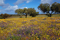 Wildflowers, Alentejo, Portugal
