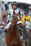 Mucho Macho Man, Rajiv Maragh up, takes part in the post parade before the136th running of the Preakness Stakes at Pimlico Race Course, May 21, 2011. (Joan Fairman Kanes/Eclipsesportswire)