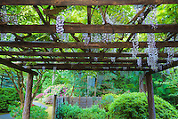 A purple wisteria is in Spring bloom hanging from large wooden arbor viewed from below out towards Portland Japanese Garden trees and flowering bushes