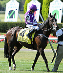 July 05, 2014: Adelaide (IRE) with Colm O'Donoghue in of the Grade I Belmont Derby Invitational Stakes for 3-year olds, going 1 1/4 mile on the inner turf at Belmont Park. Sue Kawczynski/ESW/CSM
