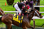 New York, NY - OCT 1: Paulassilverlining, #4  with John Velazquez aboard. wins the Gallant Bloom Handicap at Belmont Park on October 1, 2016, in Elmont, NY. (Photo by Sue Kawczynski/Eclipse Sportswire/Getty Images)