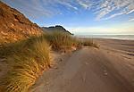 European beach grass lines the sandy beach at Carl Washburne State Park in Oregon, USA