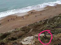 BNPS.co.uk (01202 558833)<br /> Pic: JamesFanton/BNPS<br /> <br /> A dog that plummeted 50ft off a cliff while chasing a bird has had a miracle escape after emerging from the ordeal unscathed.<br /> <br /> Tia, a Staffordshire Bull Terrier, had to be rescued after tumbling over the edge of the 120ft cliff at Hengistbury Head in Bournemouth, Dorset.<br /> <br /> She landed on a ledge unharmed, much to the relief of her owner Michelle Senjack who watched helplessly from the top.