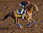October 27, 2014:  V E Day, trained by Jimmy Jerkens, exercises in preparation for the Breeders' Cup Classic at Santa Anita Race Course in Arcadia, California on October 27, 2014. John Voorhees/ESW/CSM
