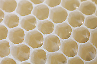 Honey comb, rapeseed honey