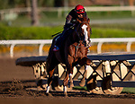 OCT 25: Breeders' Cup Sprint entrant Catalina Cruiser, trained by John W. Sadler, works out under assistant trainer Juan Leyva, at Santa Anita Park in Arcadia, California on Oct 25, 2019. Evers/Eclipse Sportswire/Breeders' Cup
