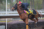 SHA TIN,HONG KONG-DECEMBER 09: Lucky Bubbles,trained by Francis Lui Kin-wai,exercises in preparation for the Hong Kong Sprint at Sha Tin Racecourse on December 9,2016 in Sha Tin,New Territories,Hong Kong (Photo by Kaz Ishida/Eclipse Sportswire/Getty Images)