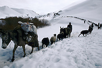 Sheeps on the way to Kabul and donkey's charge with food going to the Bamiyan valley at 3352 meters high on the Wonay Pass in the Baba Range how culminate at 5100 meters high.