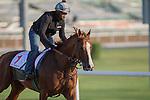MEYDAN,DUBAI-MARCH 25: California Chrome,trained by Art Sherman,exercises in preparation for the Dubai World Cup at Meydan Racecourse on March 25,2016 in Meydan,Dubai (Photo by Kaz Ishida)