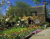 Tom Mackie, FLOWERS, photos, Norfolk Cottage & Spring Garden, Woodbastwick, Norfolk, England, GBTM87859,#F# Garten, jardín