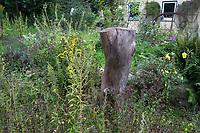 Totholz im Garten, Naturgarten, Baumstamm wird stehen gelassen als Lebensraum für Insekten, Stamm, Baumstubben