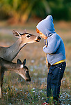 Child feeds Key deer, The Keys, Florida, USA