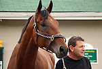 April 13, 2015 American Pharoah arrives at Churchill Downs from Arkansas with the other Bob Baffert horses.  He is the winner of the 2015 Arkansas Derby and a possible favorite for the Kentucky Derby. Owner Zayat Stables ©Mary M. Meek/ESW/CSM