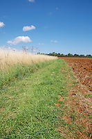 Cultivated field with conservation margin ready for drilling - Lincolnshire, September
